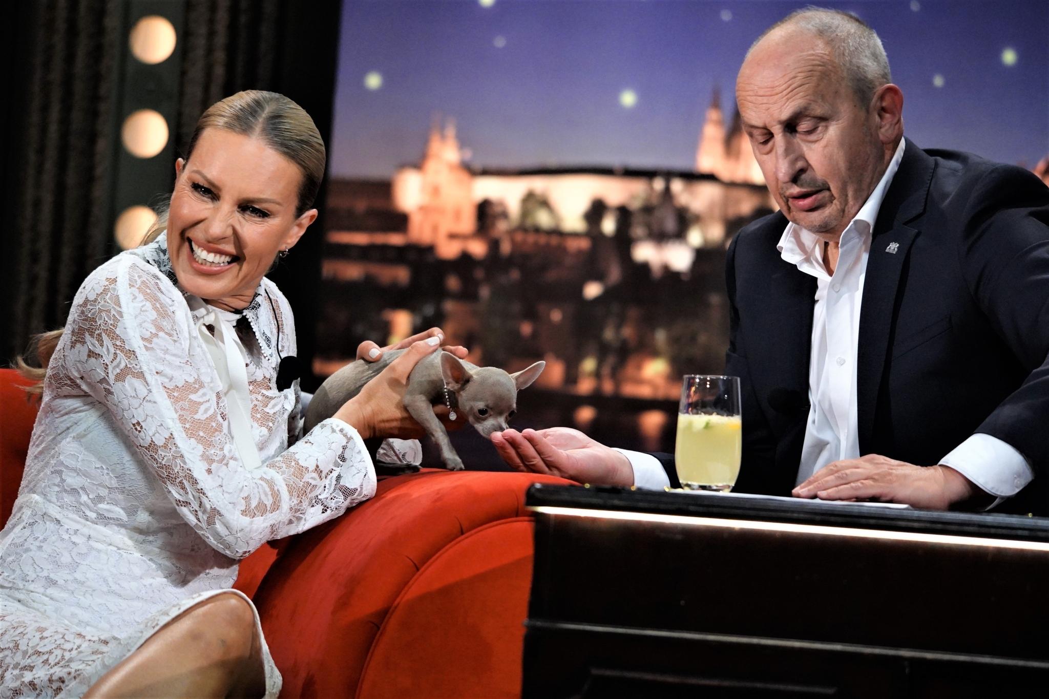 AngelA — čivava Simony Krainové v SJK 2. 9. 2020
