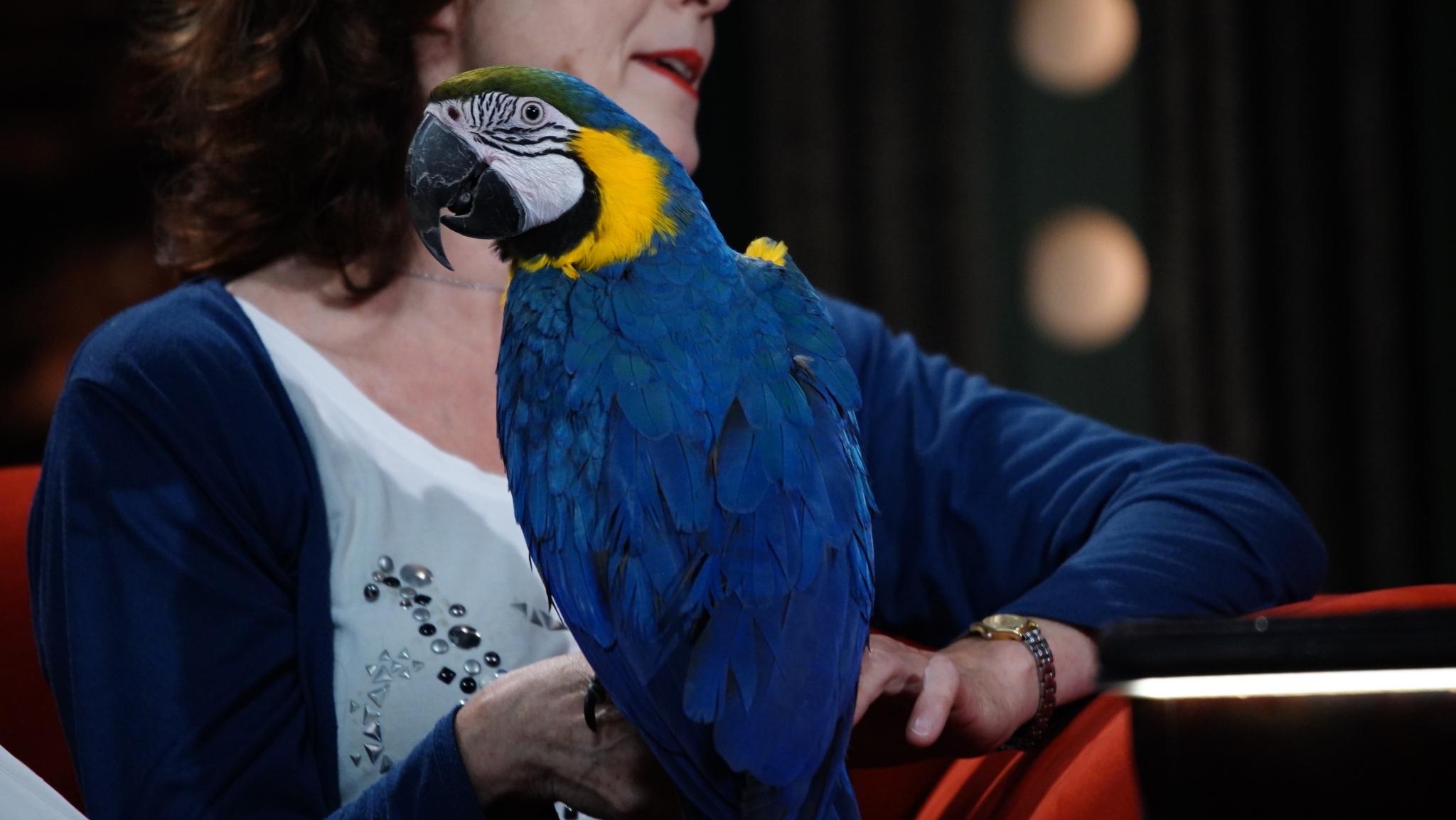 Chovatelka papoušků Magdalena Žohová s arou araraunym Buckym v SJK 14. 10. 2020