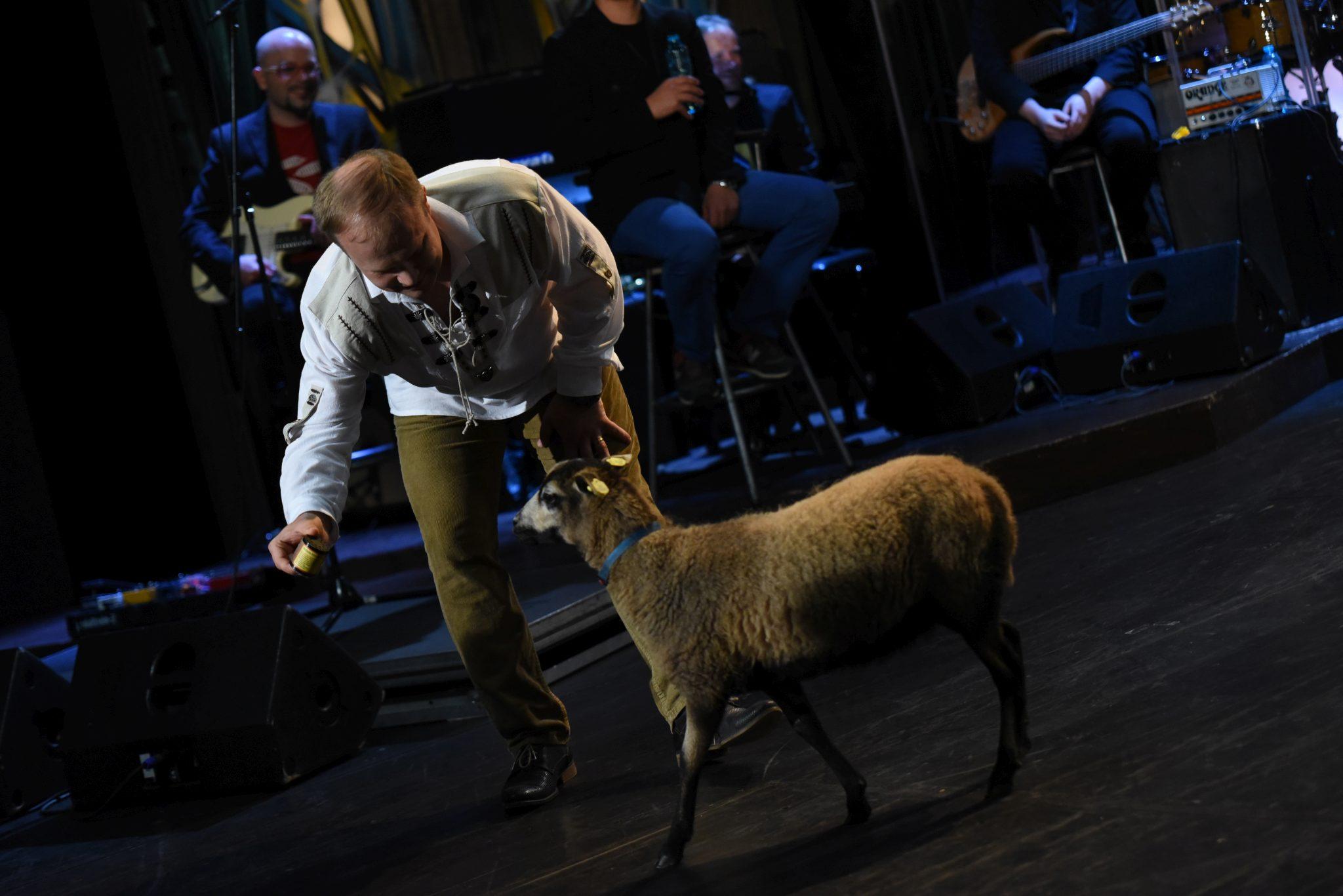 Vábení ovce v SJK 1. 6. 2016